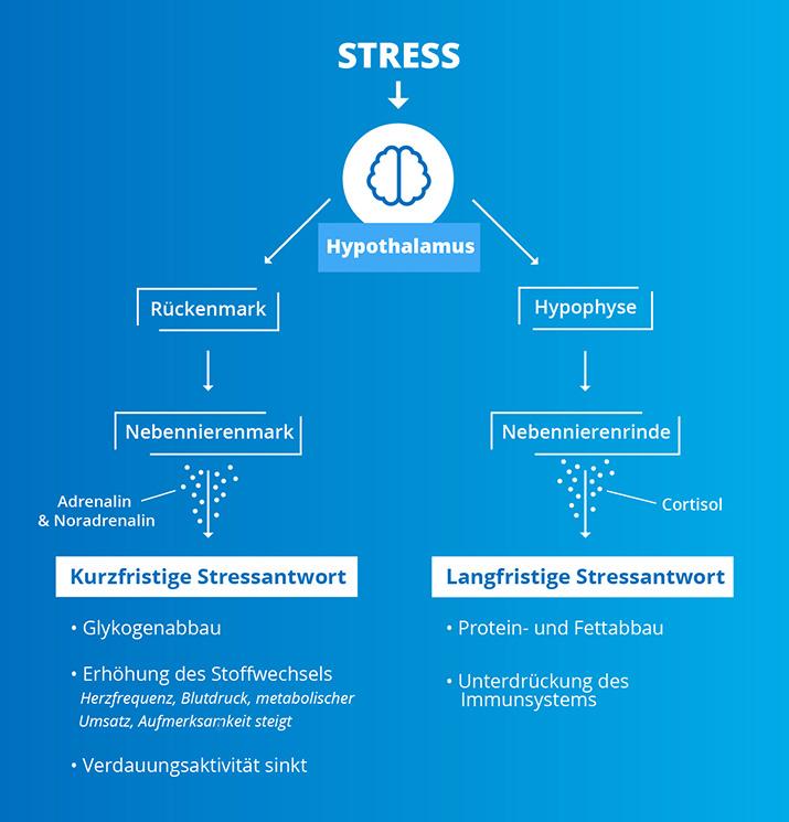 Stressfaktoren Infografik