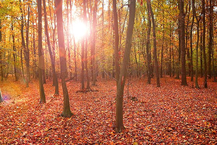 Nicht umsonst gibt es so viele Gedichte über den Herbst: Er ist ein wahres Farbenspektakel.